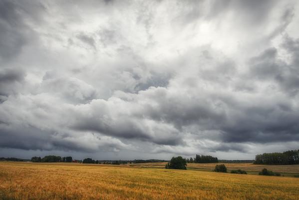 Golden Fields Sky