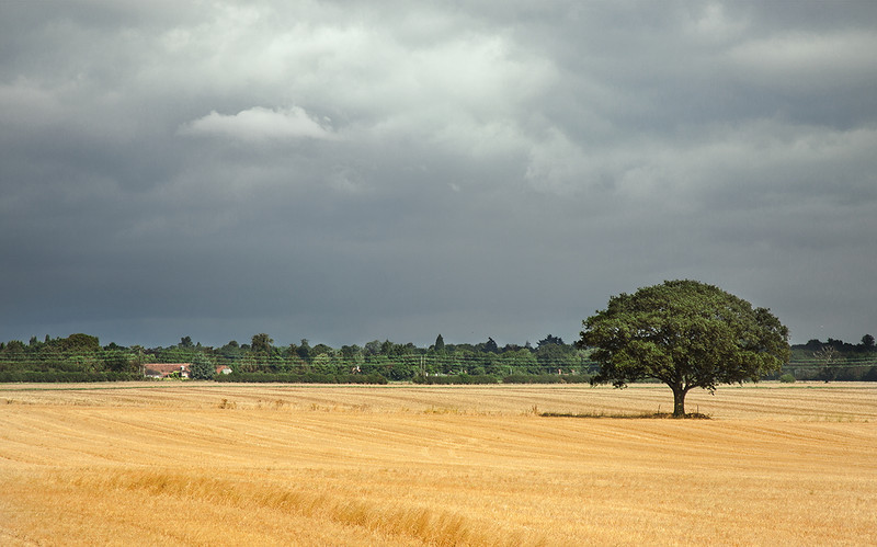 30th Aug 12:  Storm clouds from Shottesbrooke Farm