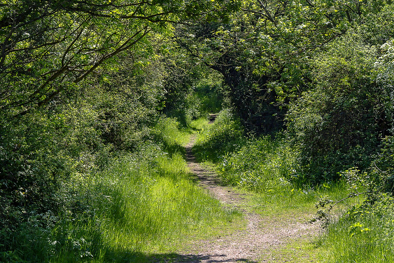 29th May 2016:  Spring green foot path from Masters Crossing in Fairwood
