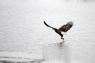Eagles_2O7A0113