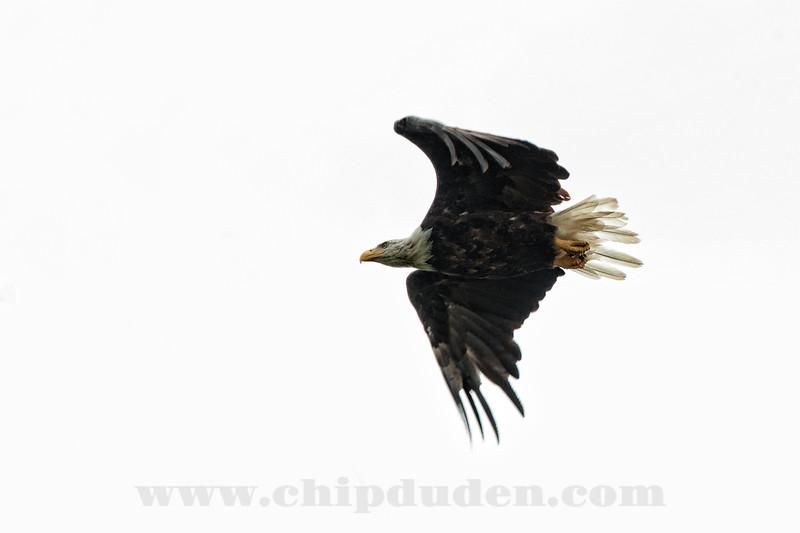 Eagle_9S7O7374