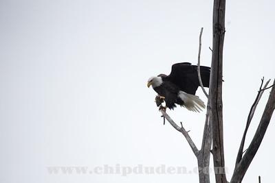 Eagles_2O7A0011