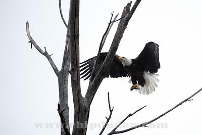Eagles_2O7A0007
