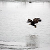 Eagles_2O7A0114