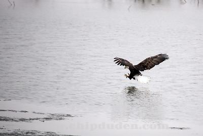 Eagles_2O7A0112
