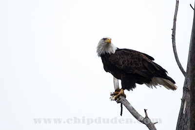 Eagles_2O7A0032_v2