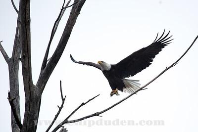 Eagles_2O7A0006