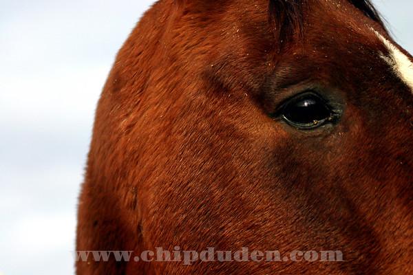 Animals_Horse_IMG_2588