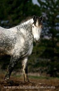 Animals_Horse_IMG_2574