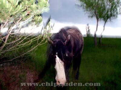 Animals_horse_flash_6759