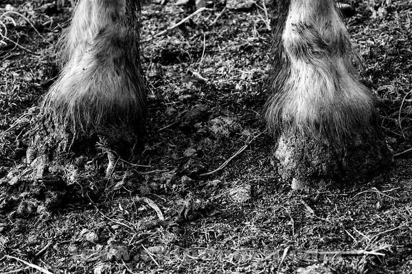 animals_horses_img_2586