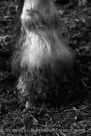 Animals_Horse_IMG_2587