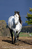 Animals_Horse_IMG_2581