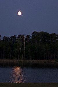 Captured by the moon.  Lake Woodlands.  Nikkor 35mm F1.4
