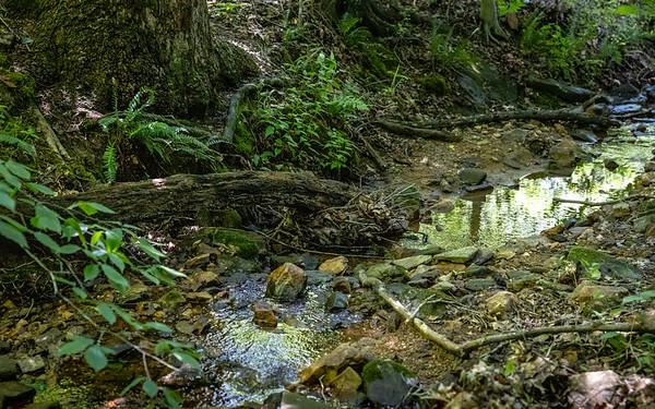 Failr Hill Natural Resources Managment Area, Elkton, Maryland