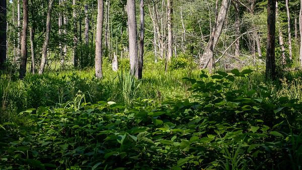 Ceres Park, Mantua, New Jersey