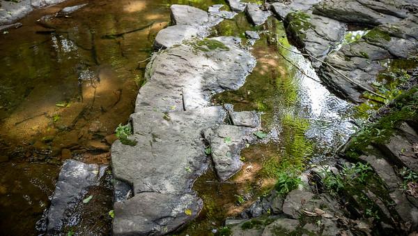 Fiddler's Creek Nature Preserve, Hopewell Township, New Jersey