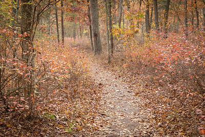 Parvin State Park, Pittsgrove Township, New Jersey