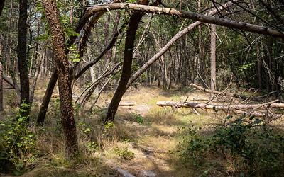 Rancocas State Park, Hainsport, New Jersey