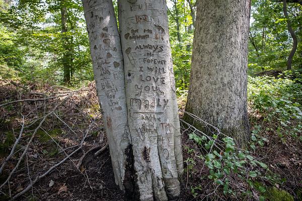 Beech Tree Sign Post