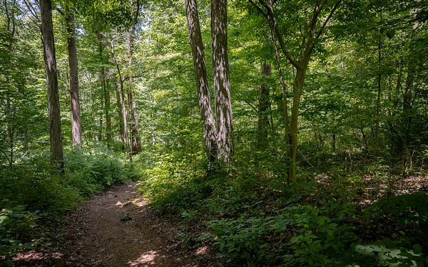 Ted Stiles Nature Preserve, Hopewell Township, New Jersey