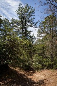 Bear Swamp Hill