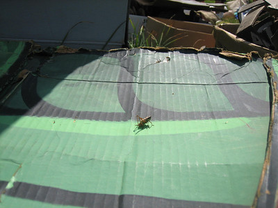A grasshopper sits on a grasshopper costume.  Whoa.