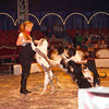 20101002_circus_Belly_Wien-4504