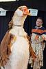 CostumeSale-0309-110916