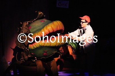 Little Shop of Horrors 2013