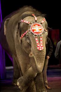 Elephant Siam