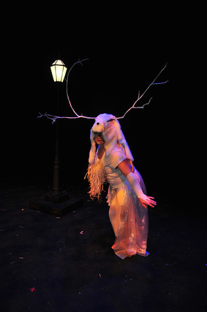 lion witch and wardrobe photo by David Grace