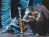 'Dr Dolittle' Musical performed at the Labatts Apollo Theatre, London, UK 1998