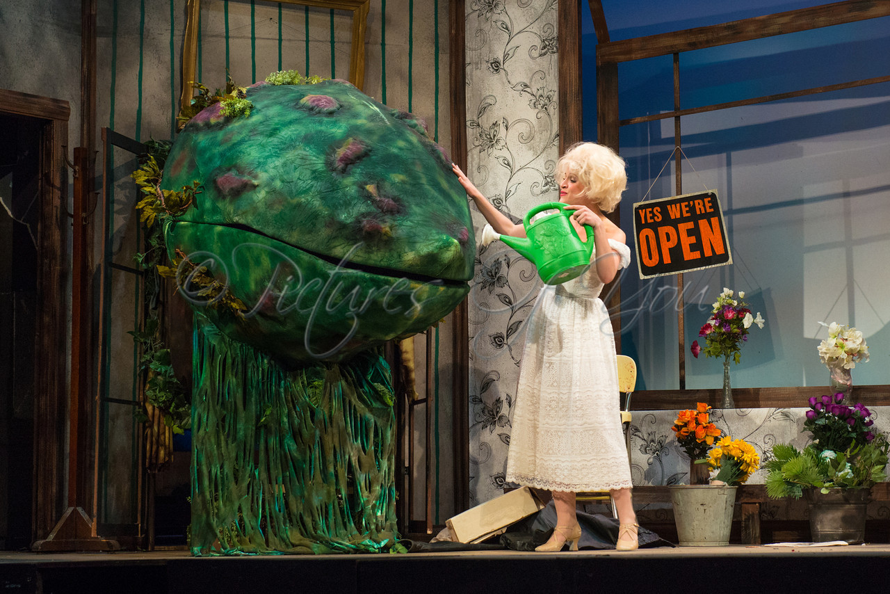 Little Shop of Horrors 302