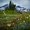 Alta Vista Wild Flowers