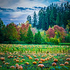Serres Pumpkin Patch