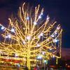 Redmond City Hall Tree