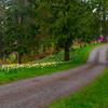Daffodil Hill Road