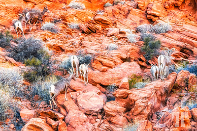 Valley of Fire State Park, Nevada (ZZ)