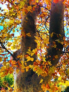 autumn-leaves-PAINTING