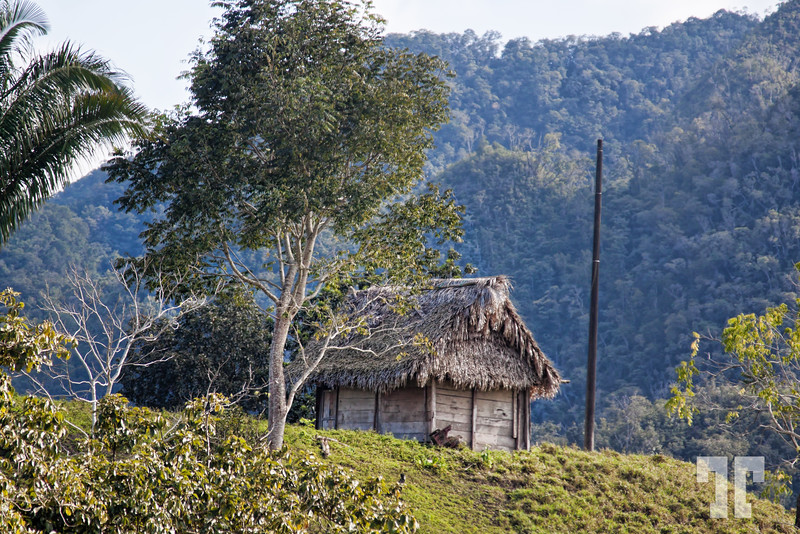 Straw covered house barn in Guatemala