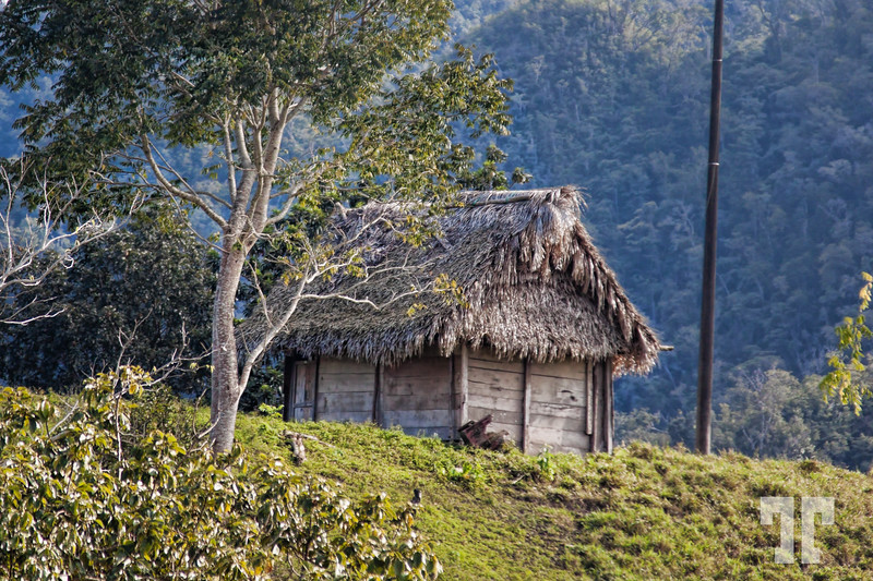 Straw covered house barn in Guatemala (xx)