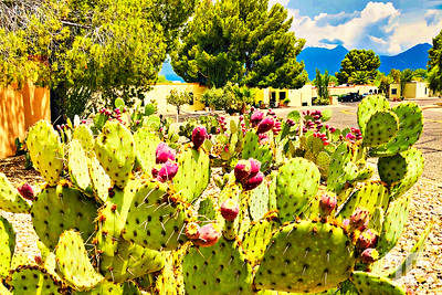 green-valley-cacti-LU