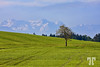 Germany country, Bodensee (Lindau) Area