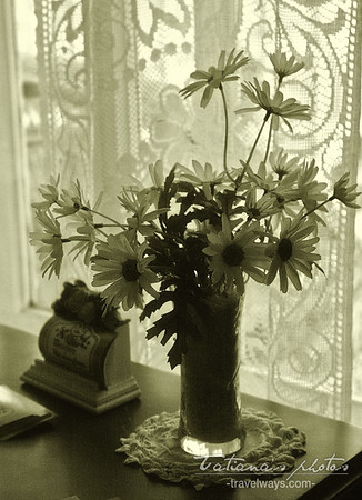 Window and flowers, monochrome