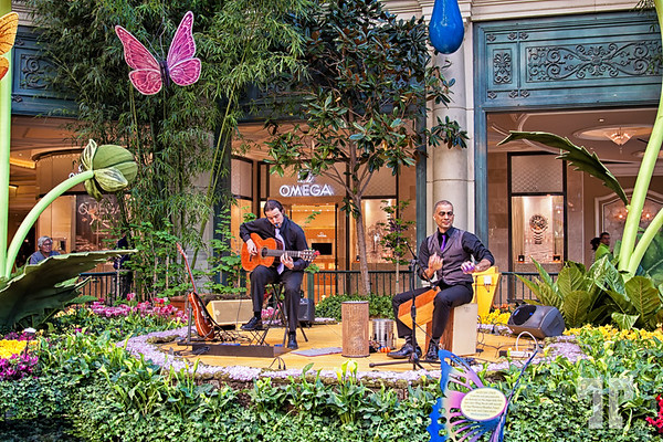 Musicians at the Spring garden and conservatory - Bellagio Hotel, Las Vegas in 2014 http://vegasgreatattractions.com/bellagio-botanical-garden-spring-2014/