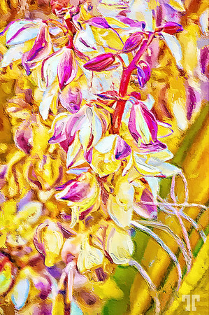 Joshuatree-flowers-painting