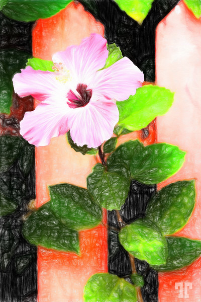 PINK-HIBISCUS-Colored-Pencil