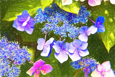 Hydrangea-flowers-Colored-Pencil