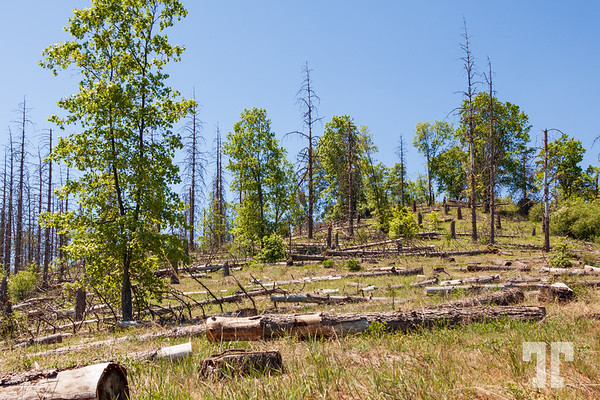 sequoia-national-forest-logs-2